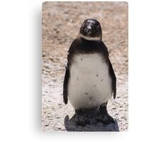 sweet penguin Canvas Print