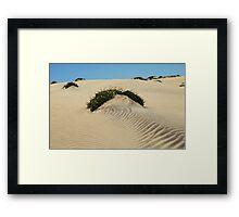 Dune Blooms Framed Print