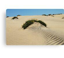 Dune Blooms Canvas Print