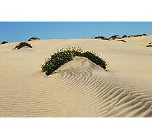 Dune Blooms Photographic Print