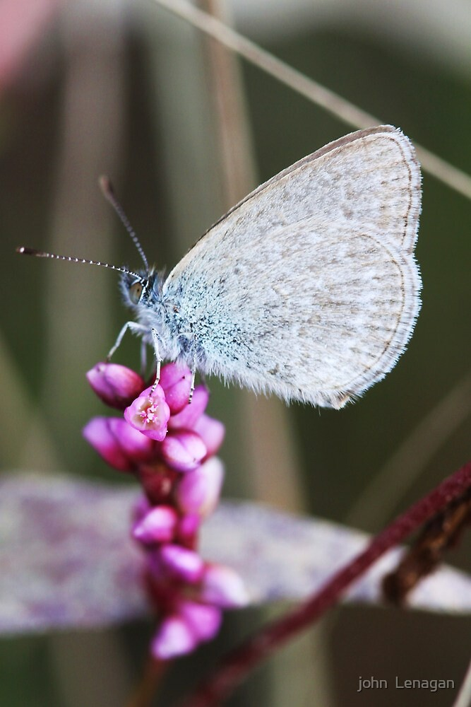 Blue Damsel by john  Lenagan