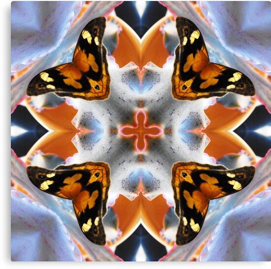 Butterfly Dreams by Matthew Walmsley-Sims