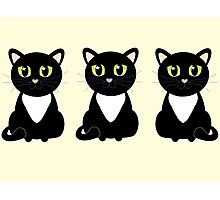 White Bibbed Black Cats Photographic Print
