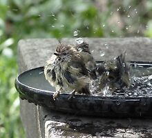 Bathing Beauties of the Feathered Kind #1 by Meg Hart