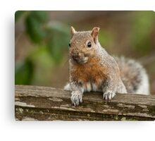 A Squirrel in Spring Canvas Print