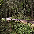 A Road Less Traveled by Bob Hortman