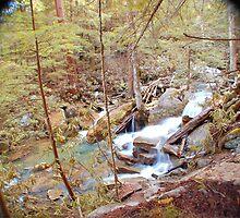 Swallow Falls-Running Rapids by William Herpel