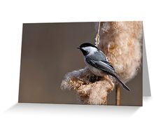 Black Capped Chickadee on Cattail Fluff - Ottawa, Ontario Greeting Card