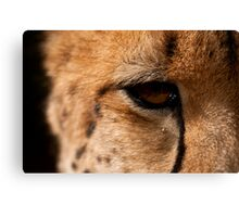 Cheetah Eye, Close Up Canvas Print
