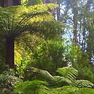 A ferny glade awaits... by Christine Oakley