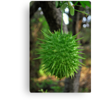 Spiked Fruit Canvas Print