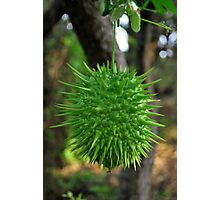 Spiked Fruit Photographic Print