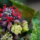Odd Flower-2 by Alan Brazzel