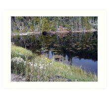 Wildflowers of Northern Ontario Art Print
