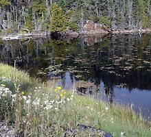 Wildflowers of Northern Ontario by Jann Ashworth