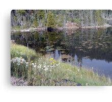 Wildflowers of Northern Ontario Metal Print
