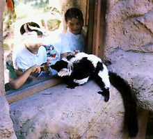 Curious Black and White Lemur Staring at Kids by Michelle Miller