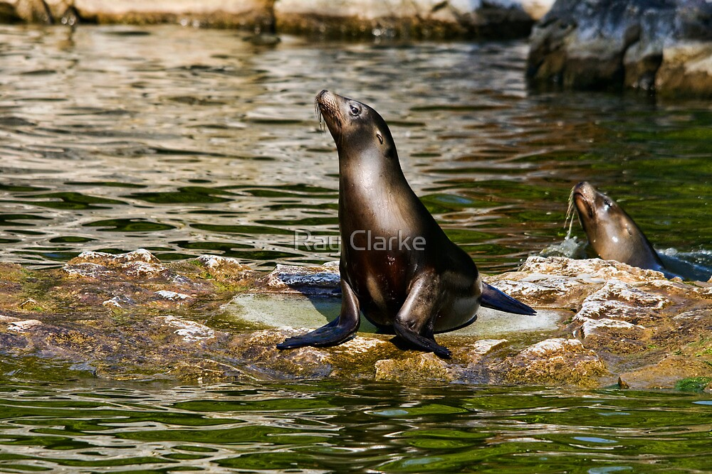 Fun in the Sun by Ray Clarke