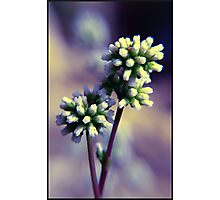 Growing - Spring's Flowers Photographic Print