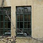 Two Windows and a walking Tree by Omar Al Nimer
