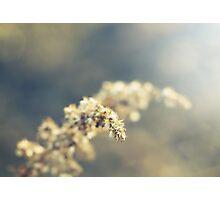 sunny Photographic Print