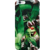 Withered tulips iPhone Case/Skin