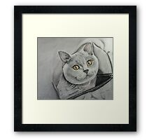 Amber in a bag Framed Print