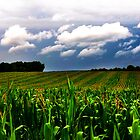 cornfield by claudio galvan