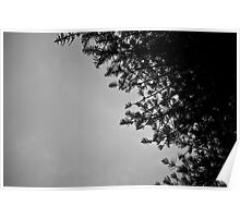 Pine Lace Poster