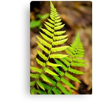 Spring Ferns Canvas Print