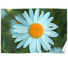A perfect summer white daisy flowers and yellow stigma. Poster