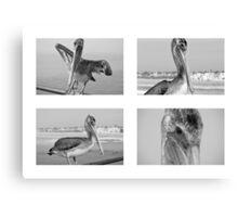 Pelican IV Canvas Print