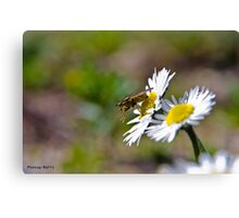 Stop bugging me Canvas Print