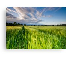 The Wind That Shakes the Barley Canvas Print