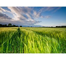 The Wind That Shakes the Barley Photographic Print