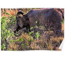 """I Hear You -Pilanesburg National Game Reserve""  Poster"