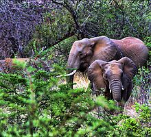 """""""I'm Coming- Pilanesburg National Game Reserve"""" by Bruce Jones"""