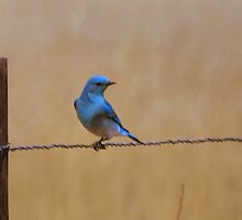 Blue Bird of Happiness by Barb Miller