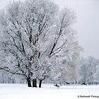 A Magnificent Winter by Barberelli