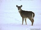 Curious Doe by Barberelli