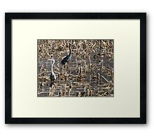 Some benefit from floods.  Framed Print