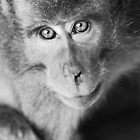 Bokeh monkey in black & white by Michael Brewer