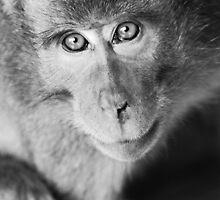 Bokeh monkey in black & white by Michael Brewer