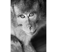 Bokeh monkey in black & white Photographic Print