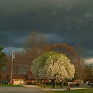 Heading Home before the Storm Hit by BCallahan