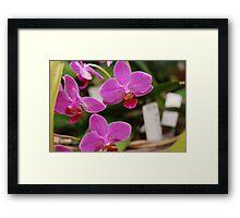 orchid #15 Framed Print