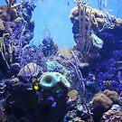 Under the Sea. California Academy of Sciences Aquarium. San Francisco 2010  by Igor Pozdnyakov