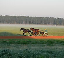 Trotter Horses by kevint