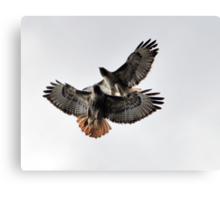 Playing Leap Hawk Canvas Print