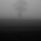 Tree in the Fog by Sam Mortimer